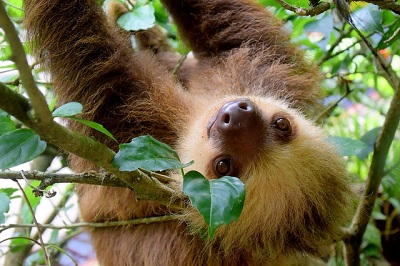 photo of a sloth